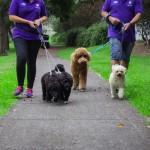 Dogs walking - Gallery