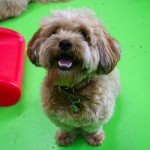 Happy Doggies - Gallery