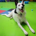 Happy Pup - Gallery