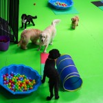 Playtime - Gallery