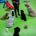 Sit Training - gallery