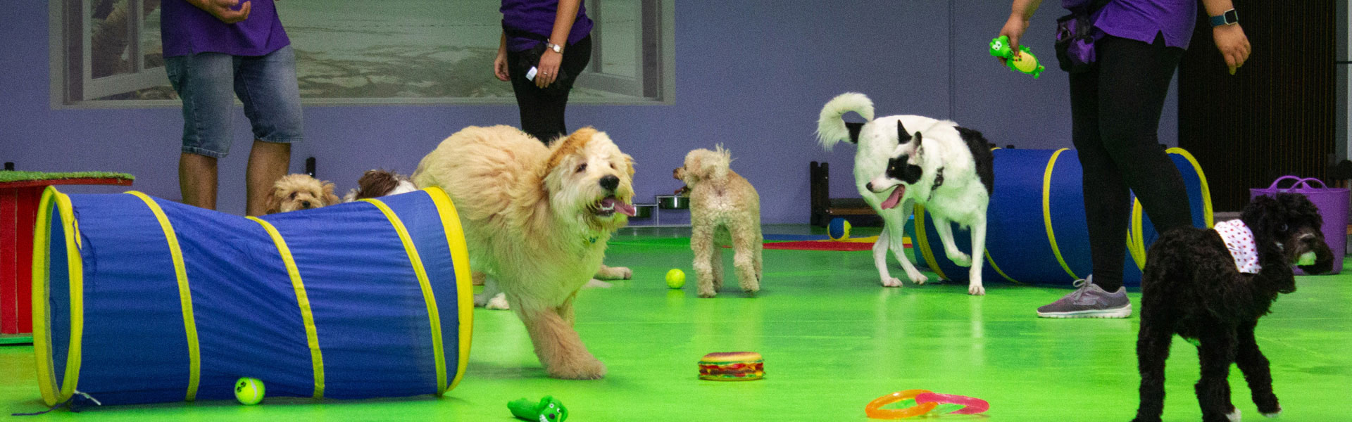 Dogs Playing at a Doggy Daycare