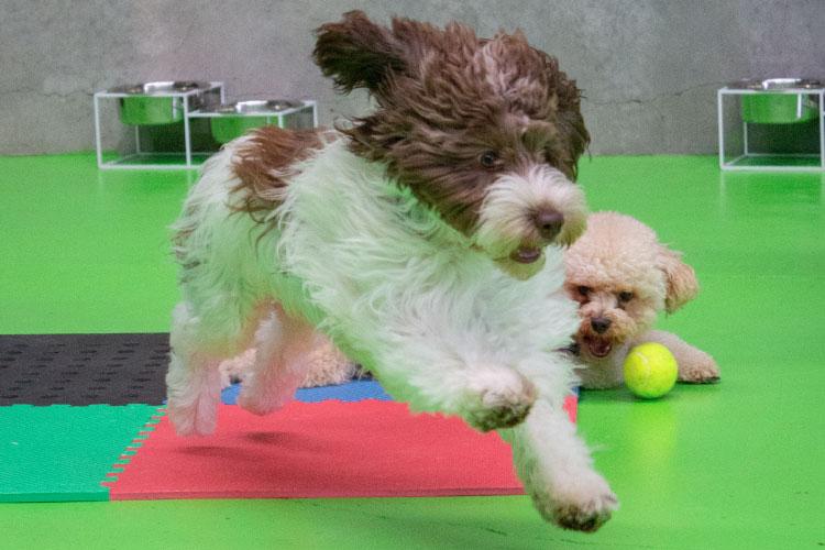 Dog running behind a ball in Fetch n Fun
