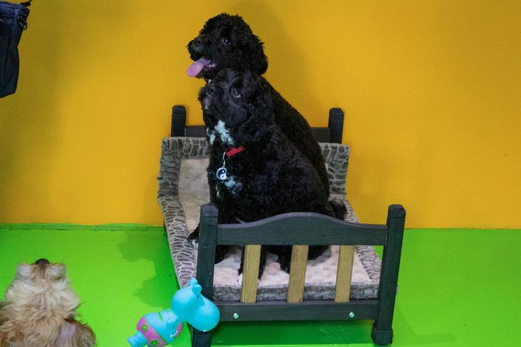 Dog sitting on a toy bed in Fetch n fun