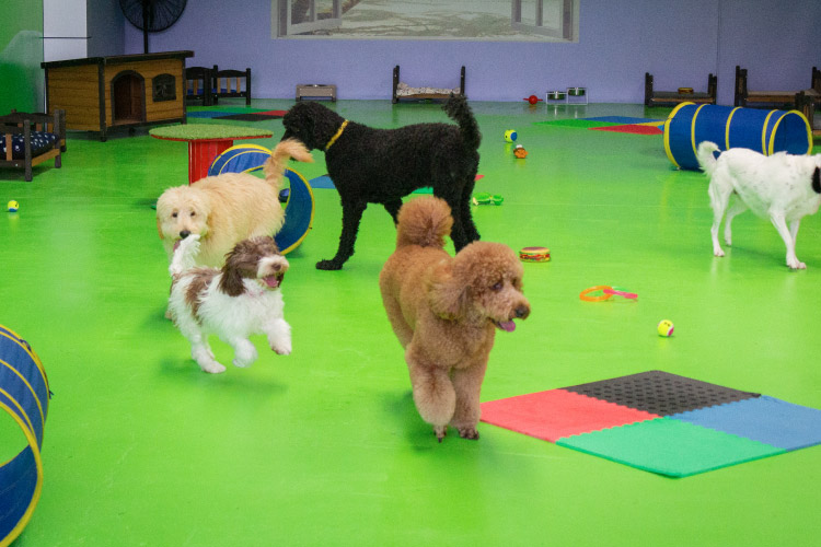 Dogs playing in the Fetch n Fun Playground