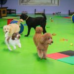 Group of dogs running around a playground