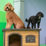 Dogs sitting on top of a wooden toy house