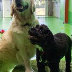 Two dogs having fun in Fetch and Fun