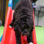 Black dog sliding down a slide