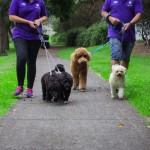 Dogs walking - Gallery